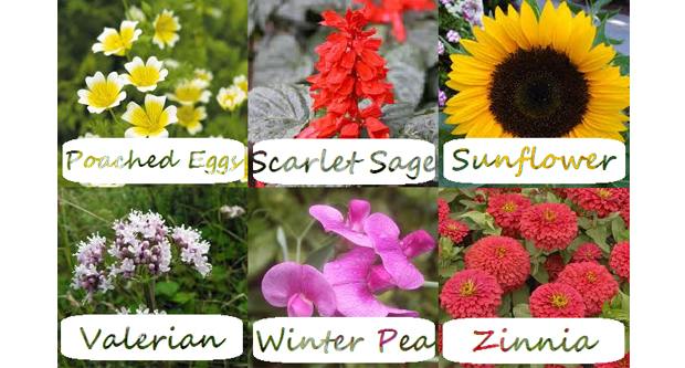 Types of Flowers Right for You