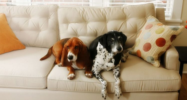 Arrange For The Caretaker For You Pets And House