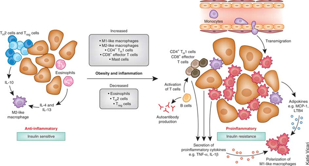 tissue-inflammations